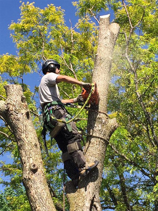 Tree Removal Service Lawrenceville GA