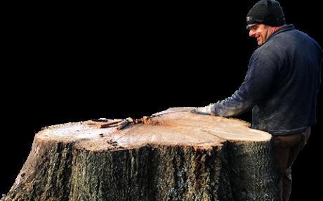 Tree Pruning Service Madison GA