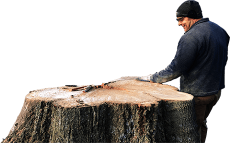 Tree Pruning Service Madison GA
